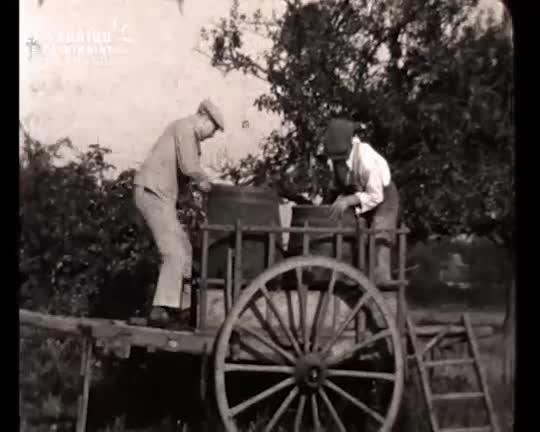 Vendange et vie à la ferme